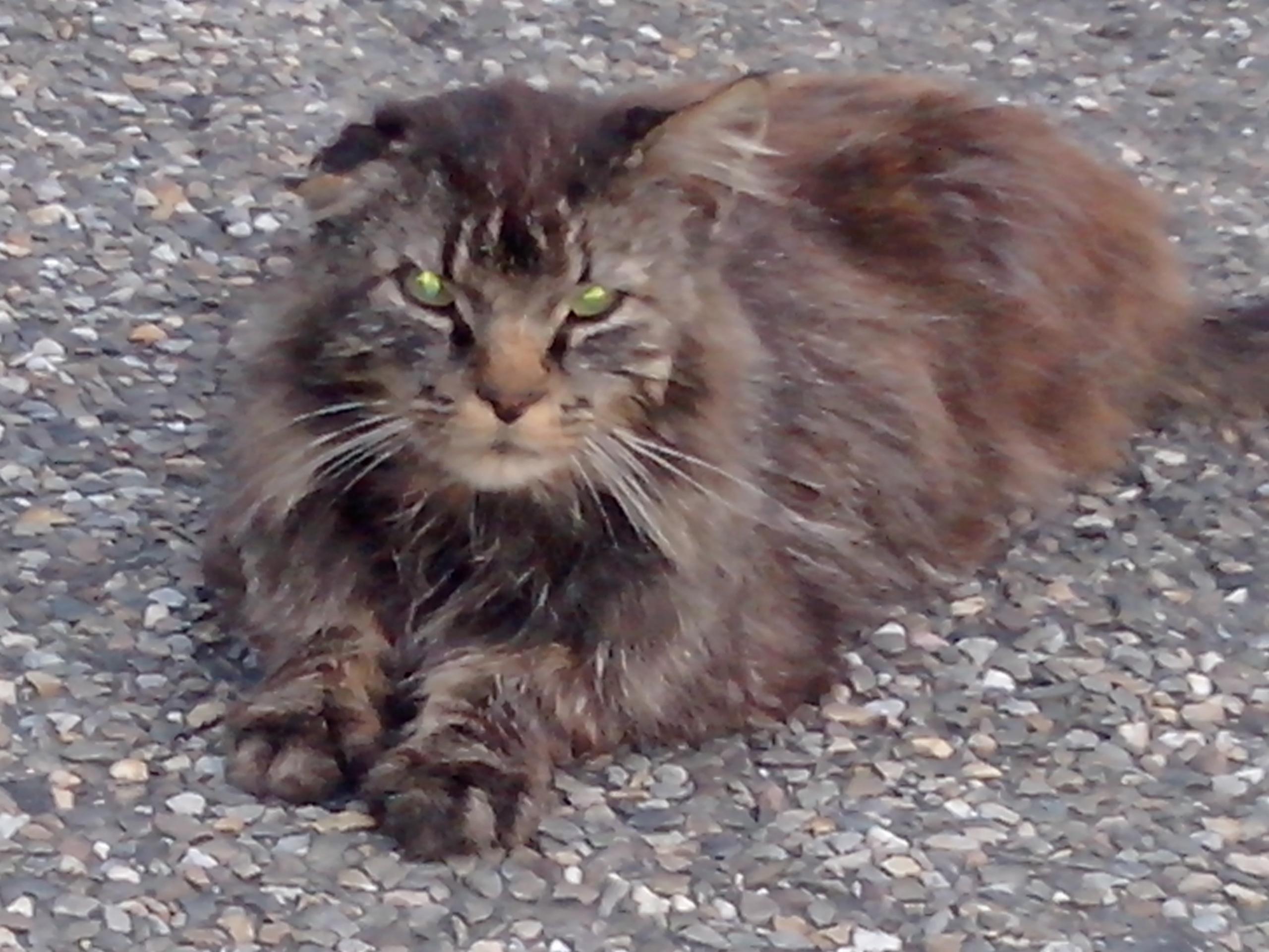 Pouchy le chat et la supervision de thérapeute.